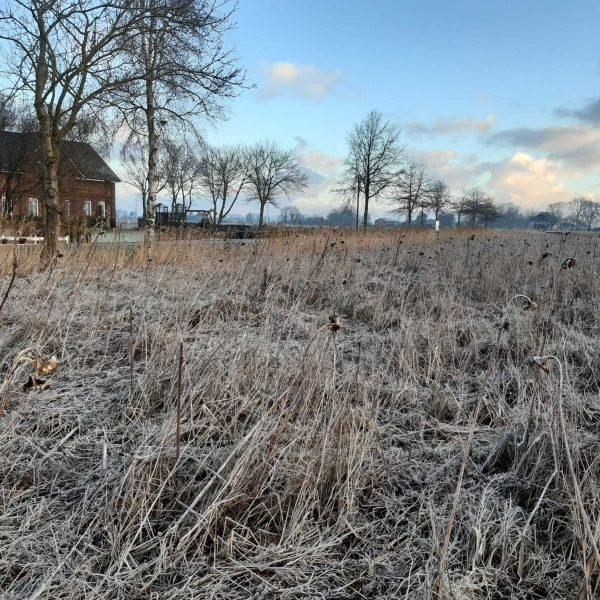 Frost Blühfläche komp