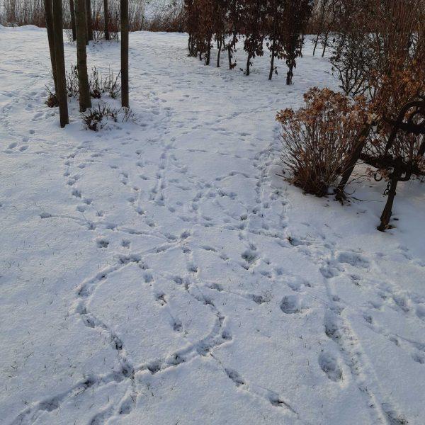 Spuren im Schnee II komp