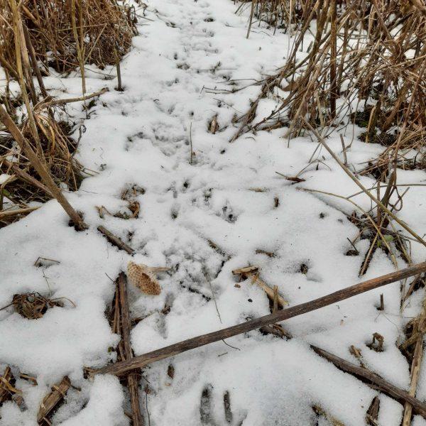 Spuren im Schnee komp